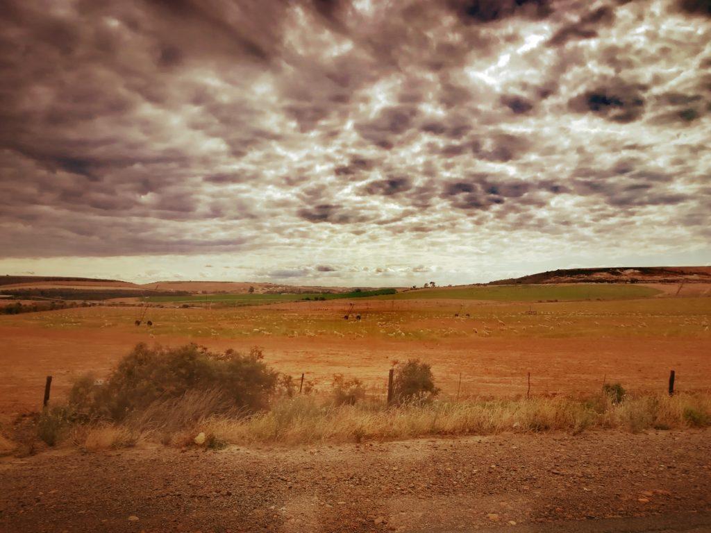 Savanen-Landschaft: sandiges Feld und wolkiger Himmel